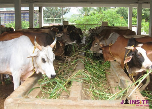 Animal Violence prevention